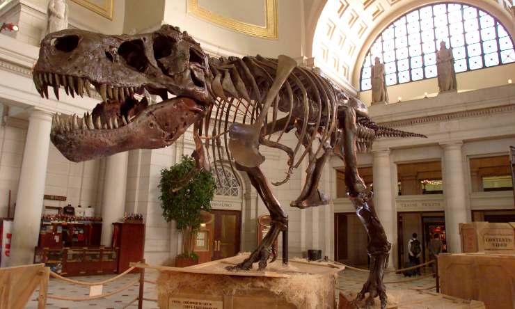 Galles impronta dinosauro